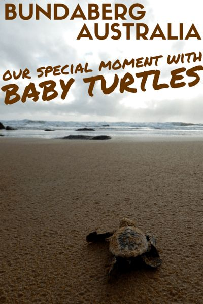 Seeing wild baby turtles reaching the ocean for the first time must be amongst all nature and wildlife lovers' dreams. We witnessed such a magic moment on the east coast of Australia, where turtles come every year to lay eggs. Learn more on my blog!