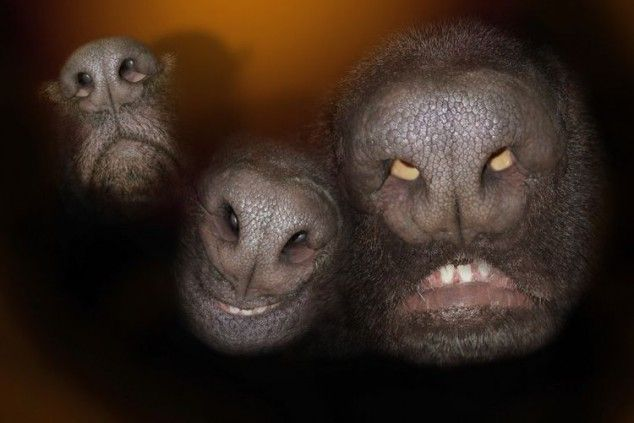 Dog noses look like angry aliens. LOL