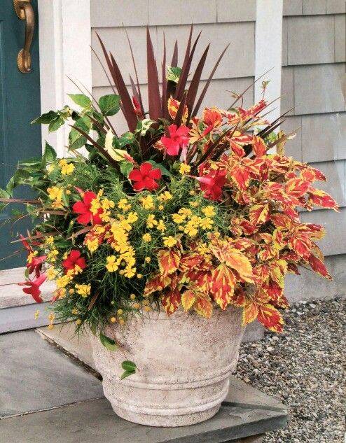 great hot colors in this container - Large Garden 2015