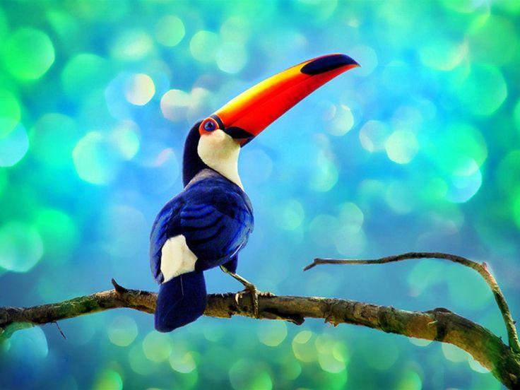 Toucan In The Rainforest Wallpaper
