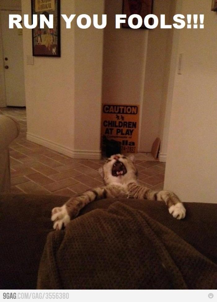 Real life lion king