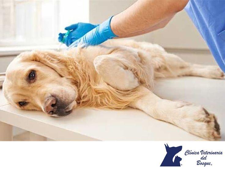https://flic.kr/p/QunnNa | Epilepsia en mascotas. CLÍNICA VETERINARIA DEL BOSQUE 3 | Epilepsia en mascotas. CLÍNICA VETERINARIA DEL BOSQUE. La epilepsia no es común en gatos, pueden presentarse por muchas causas, en algunas ocasiones diagnosticamos como idiopática (causa desconocida). Afortunadamente, hay formas de controlar los ataques que tenga tu mascota con la ayuda de medicamentos. En Clínica Veterinaria del Bosque, te invitamos a comunicarse con nosotros al teléfono 5360-3311 para…