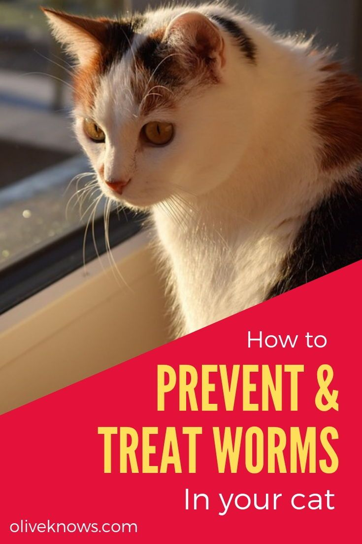How To Prevent And Treat Worms In Your Cat Oliveknows Cats Cat Safety Cat Health