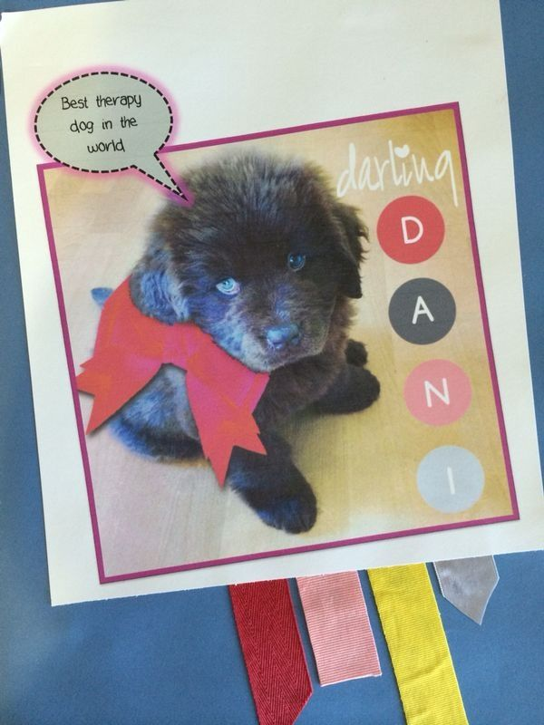 Meet Dani the therapy dog. Brightens the day of sexually abused children on a daily basis. Read more about this inspiring dog on www.jellybeanz.org.za #JellyBeanzInc #Spice4Life