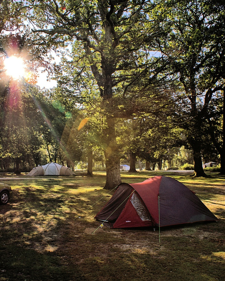 Hollands Wood Campsite nr Brockenhurst - Camping in the Forest. Me and Neil's first camping holiday....what a laugh!