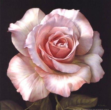 Sue Feinstein Pretty in Pink II