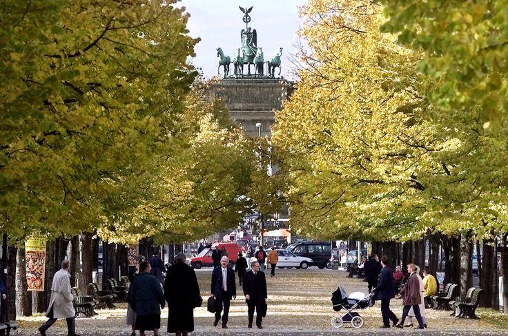 Naast de bekende winkelstraat Kurfürstendamm, is de straat/laan Unter den Linden(onder de linden) naar mijn mening de mooiste en gezelligste straat van Berlijn. De straat loopt door Oost-berlijn van de Brandenburger tor tot het Alexanderplatz. De straat is in totaal zoon 2 kilometer lang maar is zeker de moeite waard om te voet te lopen, vooral omdat er veel bezienswaardigheden te zien zijn. Een aantal hiervan zijn de Berliner dom, het nationale museum en de Humboldt universiteit.