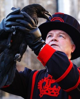 Ravenmaster with one of his six charges at the Tower of London. There is a legend that says that England will exist no more if the ravens leave the Tower. They are kept caged.