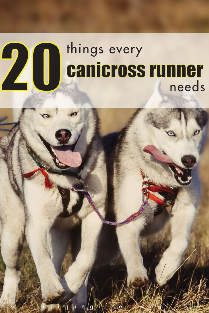 What is canicross? Running with your dog! Here's a list of 20 things every canicross runner needs. They make excellent birthday and Christmas gifts!