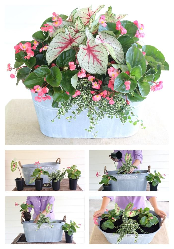 Amazing Decorated Container Ideas ~ Calling All Porches! This Shade Loving Mix Is  Just For You! Ingredients: White Queen Caladiums, Whopper Begonia, ...