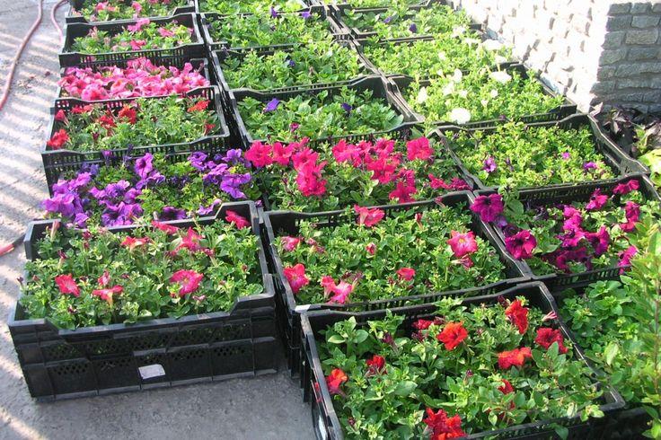 рассада цветов в феврале