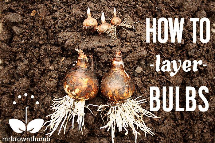 How to layer garden bulbs