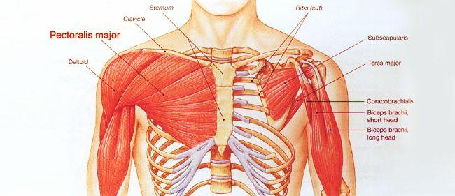 ¿Cuáles son los mejores ejercicios de musculación para pectorales? - Prozis