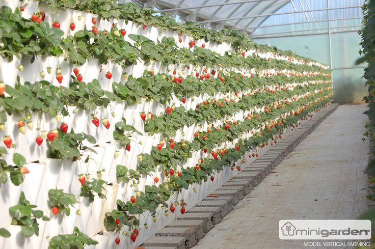 Выращивание клубники клубничная грядка для ленивых