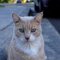 #dogalize Il gatto puzzolone: canzone per bambini #dogs #cats #pets