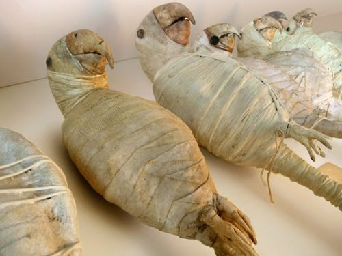 Image result for mummified parrot