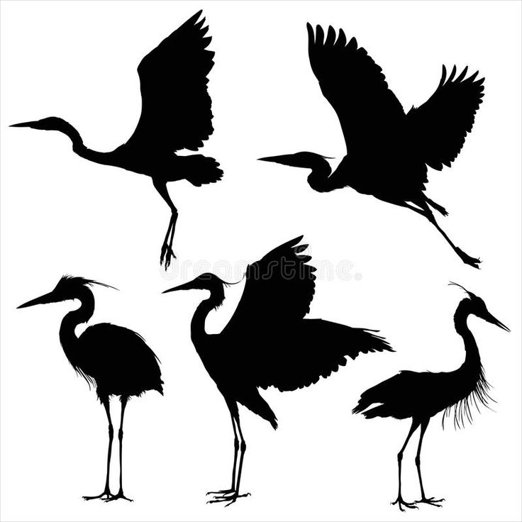 Image result for great blue heron tattoo