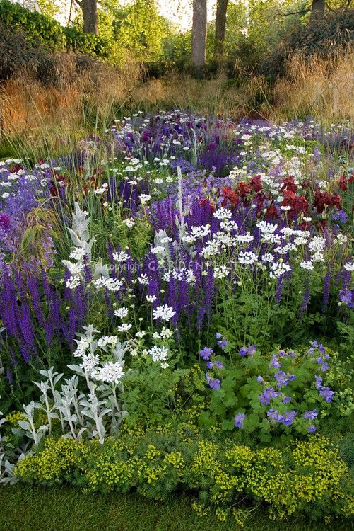 Purple and white color themed perennial border
