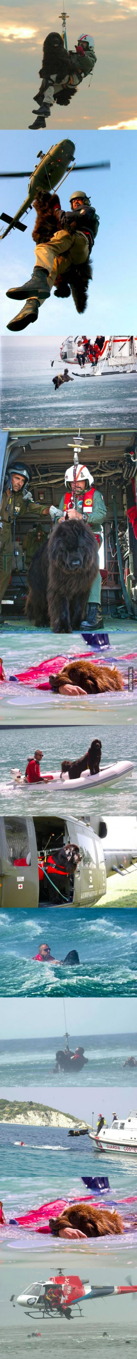 This Newfoundland dog helps the Coast Guard rescue people like it's no big deal