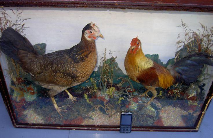 c1900 Pair of Game Birds