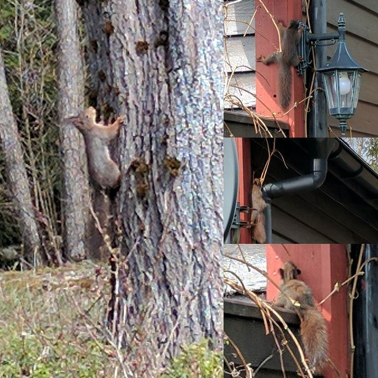 #squirrels visiting