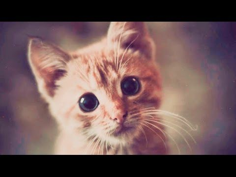 Funny Videos 2017 - Funny Cats Video - Funny Cat Videos Ever - Funny Animals Funny Fails 2017 - http://positivelifemagazine.com/funny-videos-2017-funny-cats-video-funny-cat-videos-ever-funny-animals-funny-fails-2017/ http://img.youtube.com/vi/ipa1PW85tV4/0.jpg  Funny Videos 2017 – Funny Cats Video – Funny Cat Videos Ever – Funny Animals Funny Fails 2017 Funny Videos 2017 – Funny Cats Video – Funny Cat Videos … ***Get your free domain and