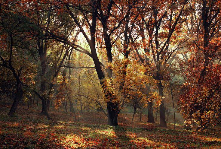 Dendrariu Park, Chisinau, Moldova