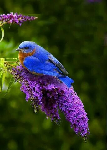 I don't know what kind of bird this is but he sure is pretty....