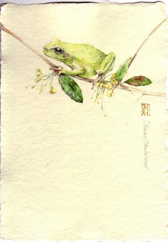 RAGANELLA. acquerello su carta a mano, Silvia Molinari