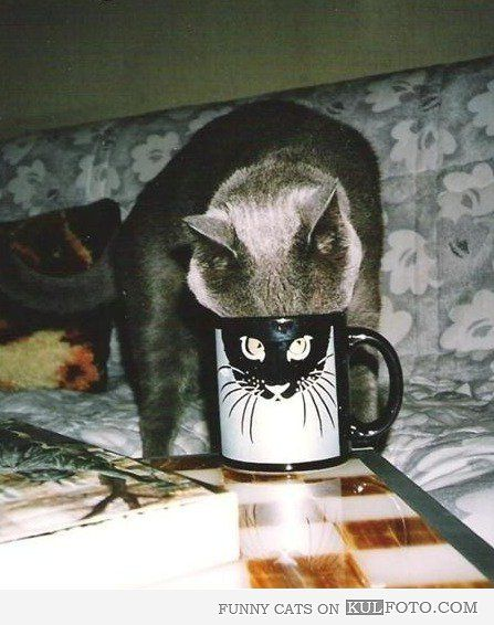 Cat MugshotFunny Pics, Funny Animal Pics, Funny Pictures, Coffe Cups, Funny Cat, Mugs Shots, Mornings Coffe, Kitty, Silly Cat