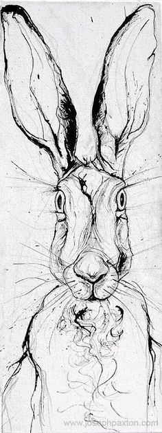 baby hare drawing - Google Search