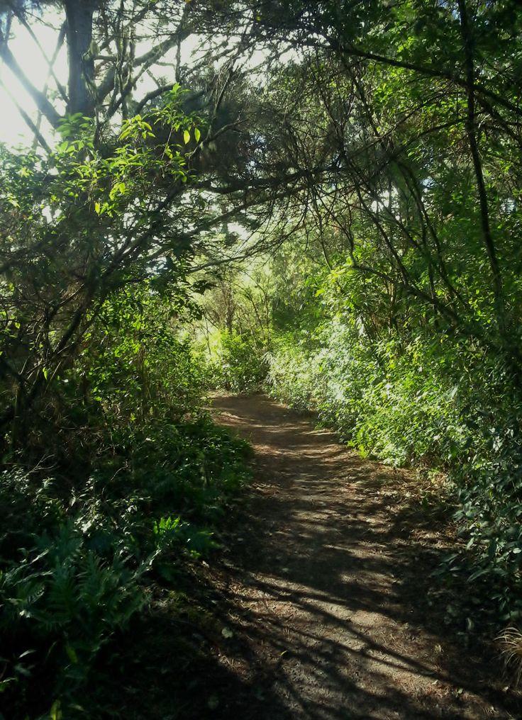 Took this photo while taking a walk to Huka Falls.