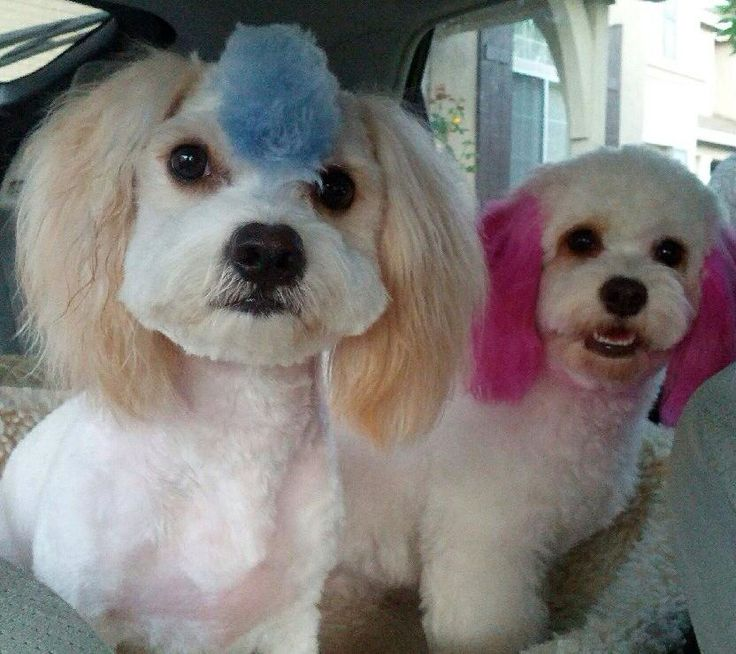 The 25+ best Dog hair dye ideas on Pinterest | Kool aid hair, Kool ...