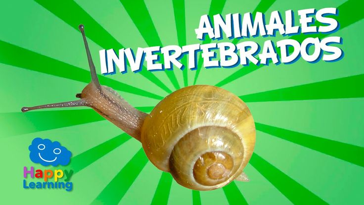 Animales Invertebrados | Videos Educativos para Niños