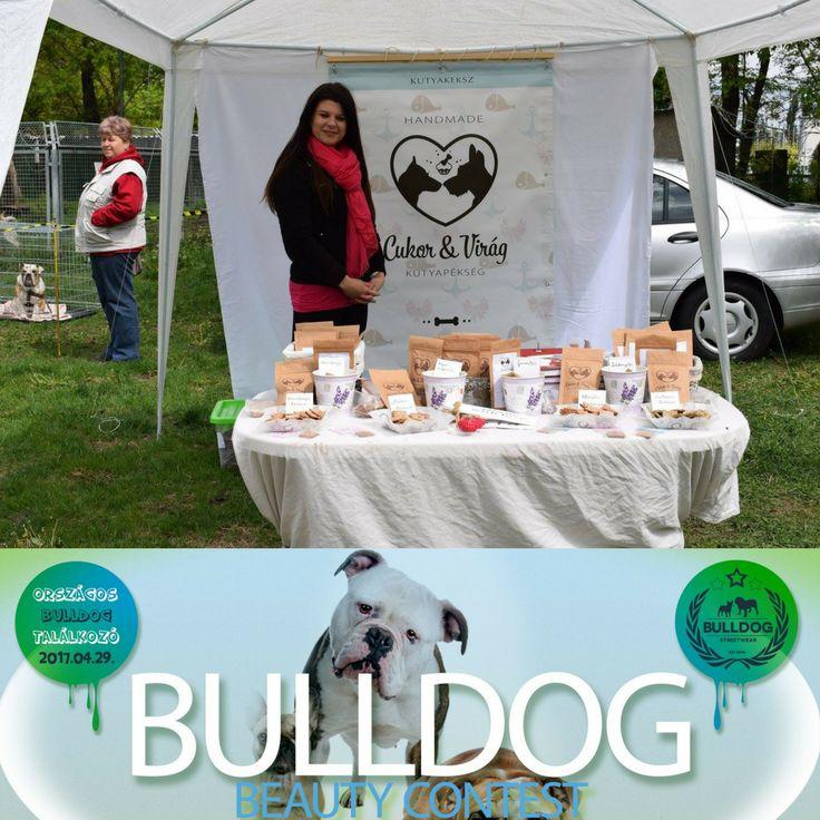At the National Bulldog Meeting. Az Országos Bulldog Találkozón.