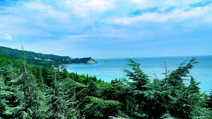 Pine trees on the seashore