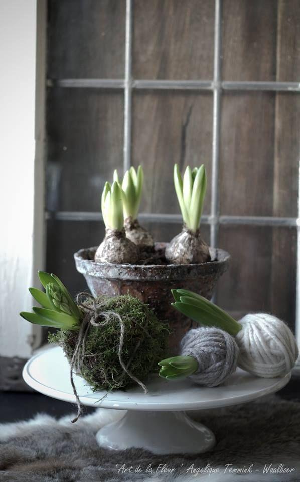 art de la fleur   hyacinten!   Huisjekijken