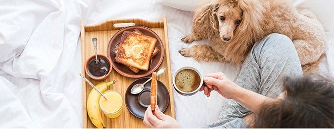 Many of us love to feed our dogs human food as a sign of our love and affection. While some foods may be OK to feed, here is a list of the 10 foods that should never be fed to our much loved canine companions.  https://www.epetstore.co.za/why-your-dog-should-never-eat-these-10-foods