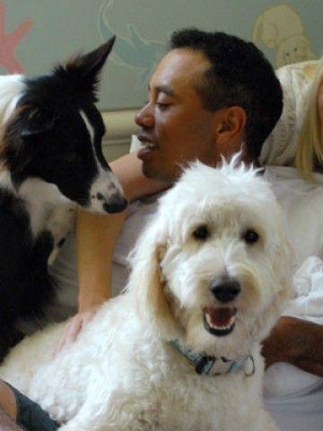 GitHub - jaxk25/Celebrity-Dogs: Celebrity dogs game in ...