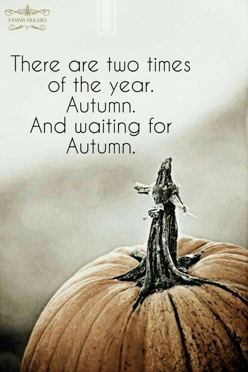Charmant I Love All The Seasons, But I Have To Agree, Fall Is Definitely My  Favourite. Great Quotes ...