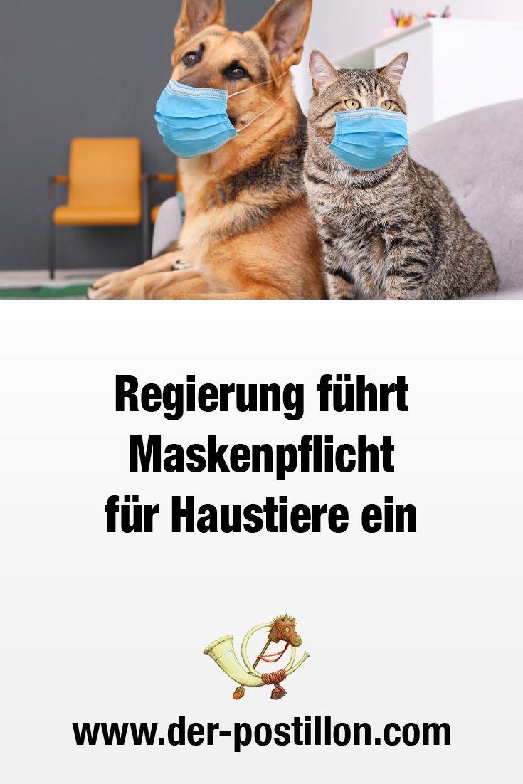 Mundschutz Hund