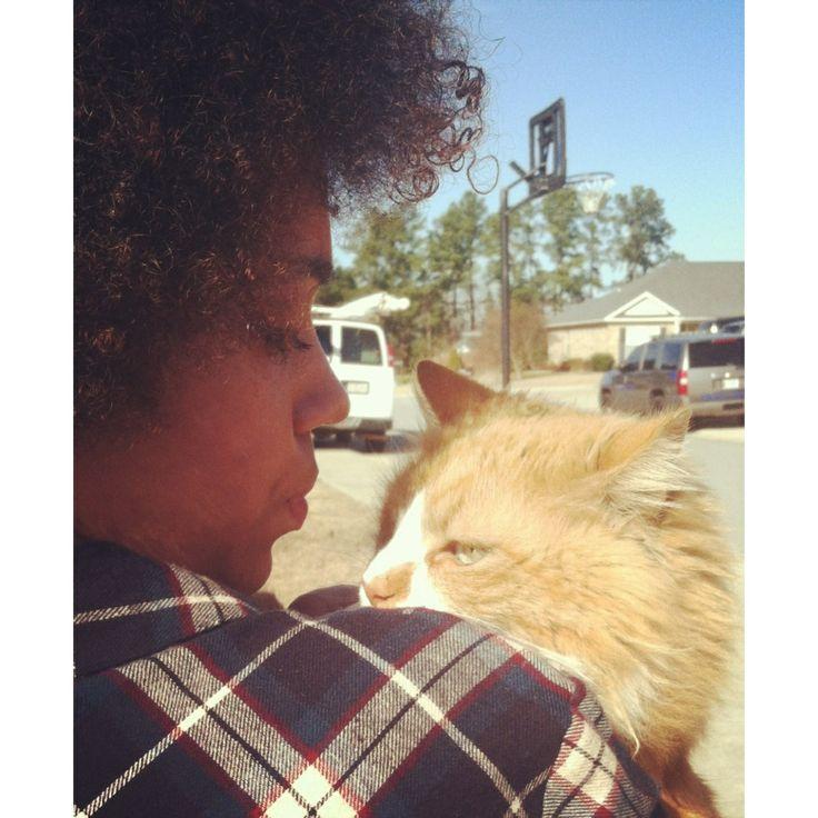 #Mancoon#Cat#Orange#GreenEyes#Afro#Pretty#Animals