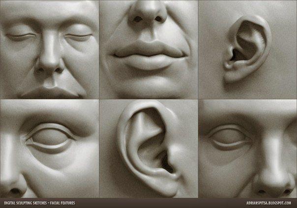 Автор: Adrian Spitsa #anatomy #face