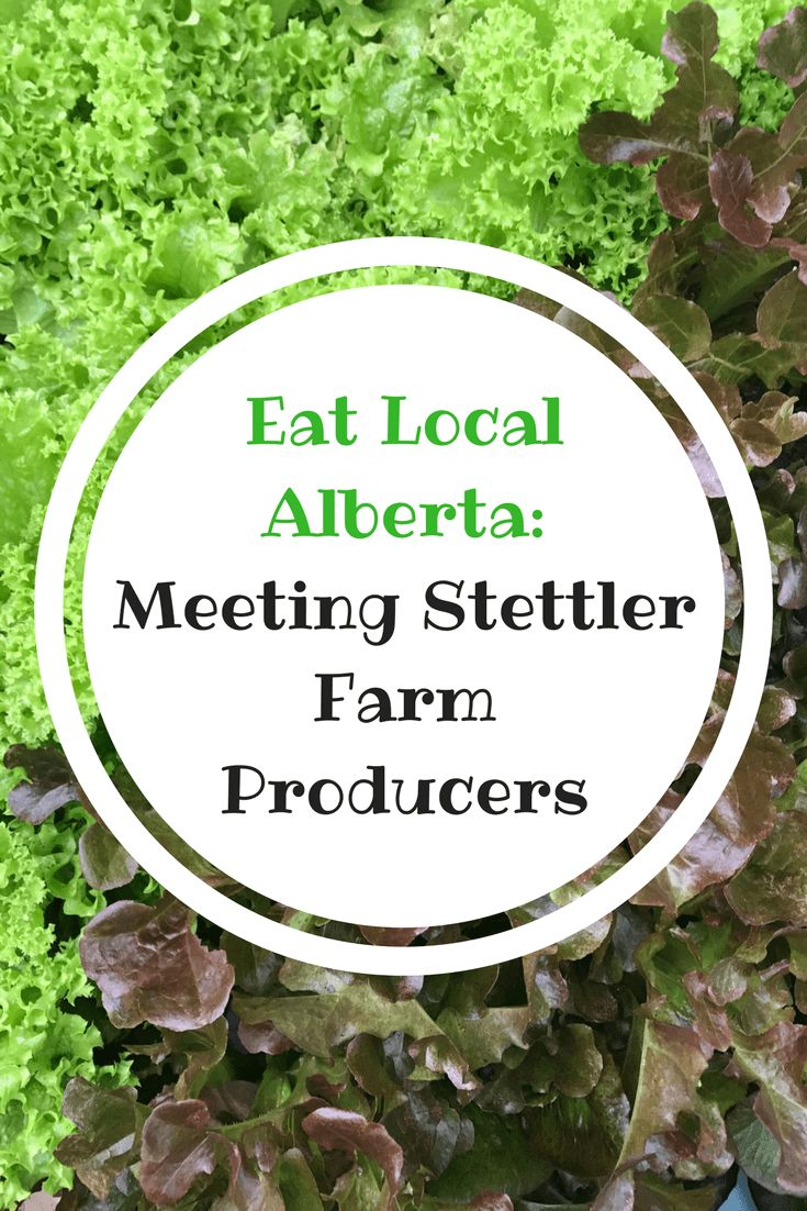 Do you eat local? Evan and I spent the day meeting 4 local farms in the Stettler area to learn about their farming methodologies.