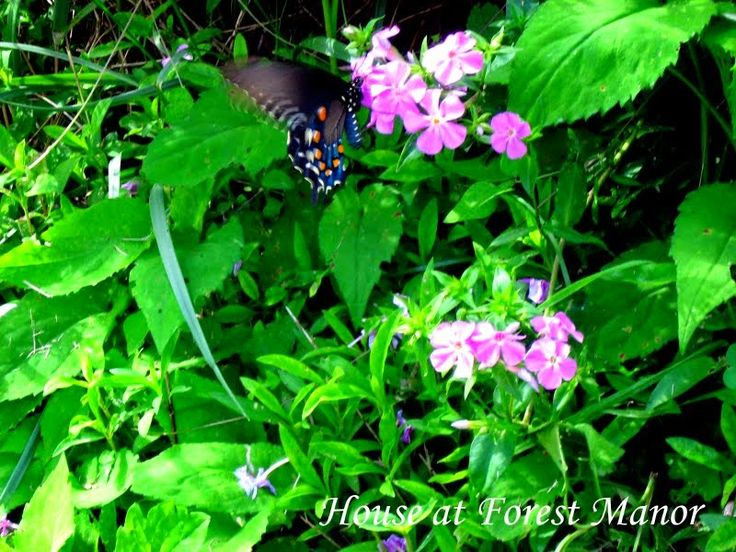 House at Forest Manor: Mountain Wildflowers