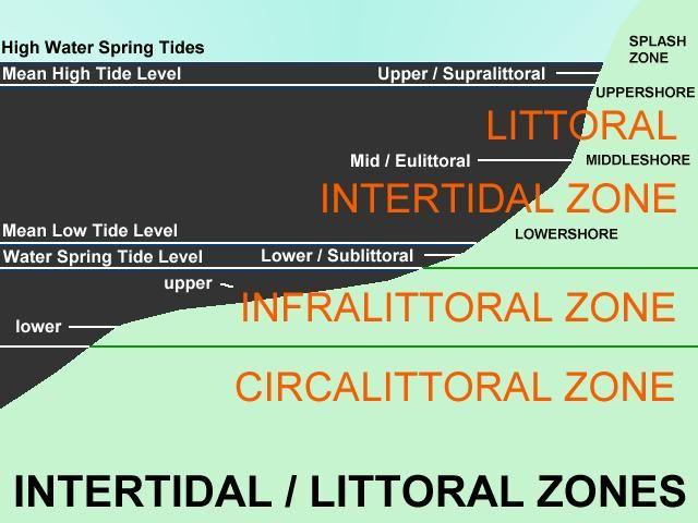 Shoreline Habitat and Intertidal Zone Images