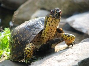 Turtles are one of feng shui's best activators for income, protection and support