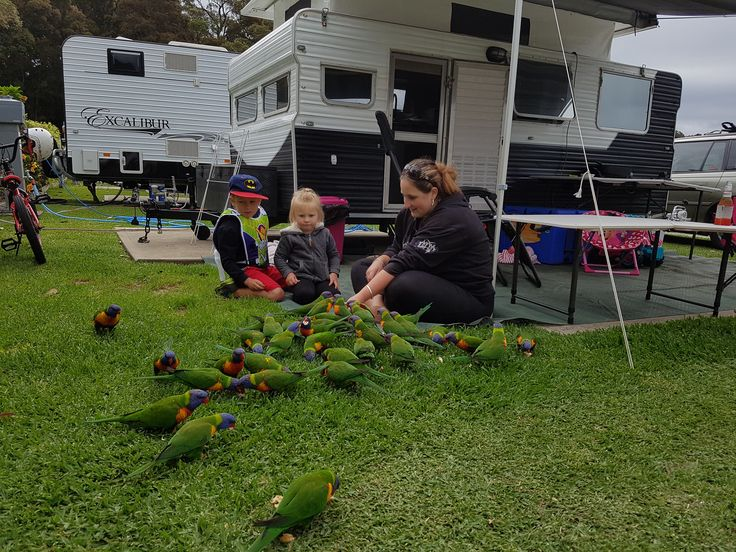 Family Fun Camping. Wildlife is amazing and the birds are beautiful.