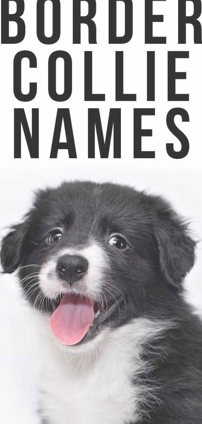 Border Collie Names Border Collie Names Border Collie Collie