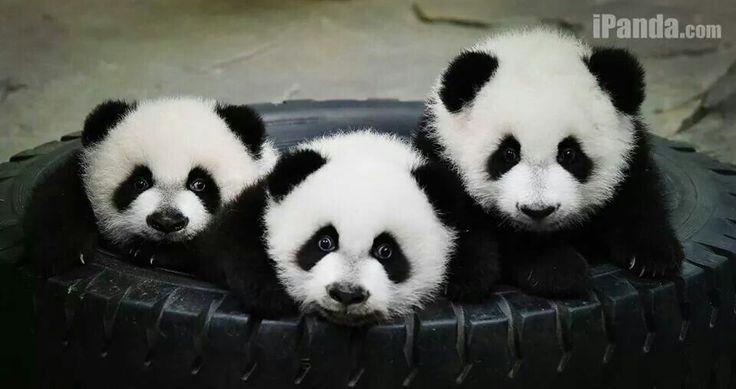 Triplets! Adorable...